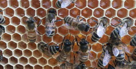 Les abeilles protègent la biodiversité : prenons soin d'elles !