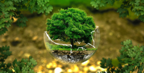 Journée de la Terre : 5 petits gestes pour la préserver