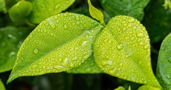 5 juin, Journée Environnement
